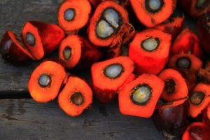 Analizziamo le controindicazioni (VERE) e le fake news sull'olio di palma