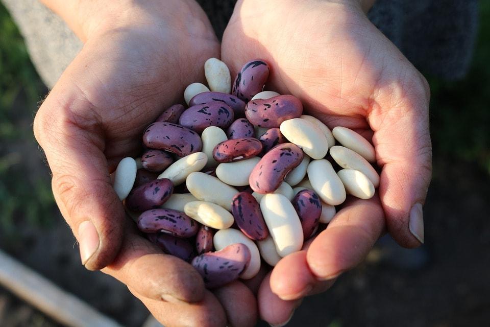 Come raggiungere il fabbisogno proteico con la dieta vegena
